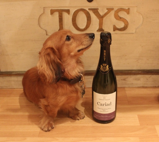 Otto never fails to sniff out a good sparkling wine